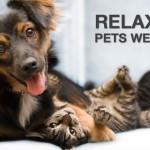 Forbes ranks Seattle's pet friendly rental market 2nd in US
