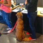 Amazon: Dog friendly Seattle's dog friendliest company