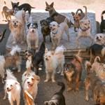 Thurston County cracks down on Furever Homes Dog Rescue