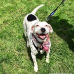 Seattle Area Weekend Dog Events: Friday, April 20 – Sunday, April 22