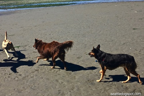 Best Off Leash Dog Parks Seattle