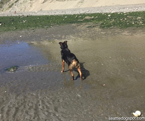 Best Off Leash Dog Parks Seattle