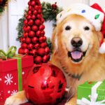 Holiday Dog Tips – Simple Solutions to Common Behavior Problems