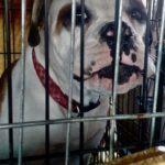 Eyewitness Says Founder of Fake Dog Rescue Beat/Killed Misbehaving Dogs
